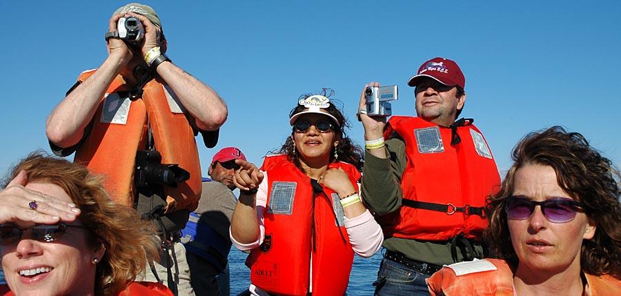 Bootstour und Grauwale beobachten