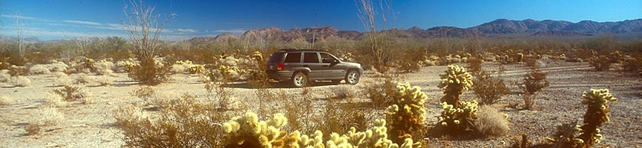 Jeeep Grand Cherokee with Teddybear Chollas in Gonzaga desert