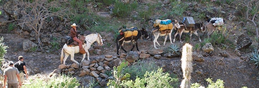mule treck into canyon san pablo